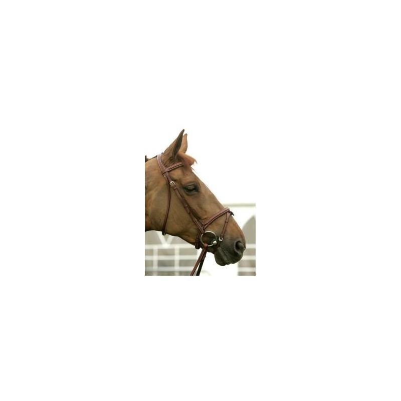 Bridin 500 horse in