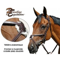Basic model bridles
